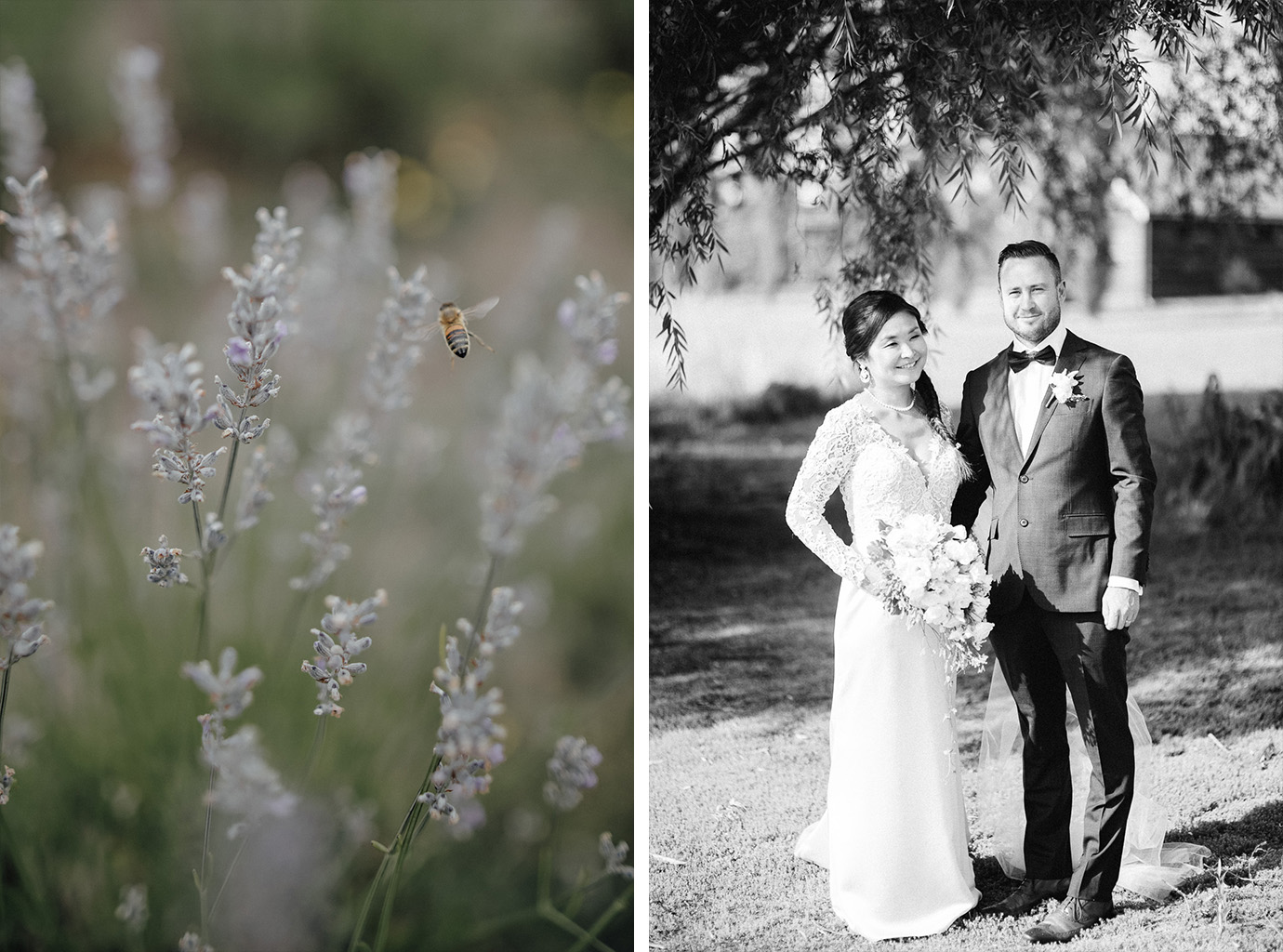 lavender field Daylesford
